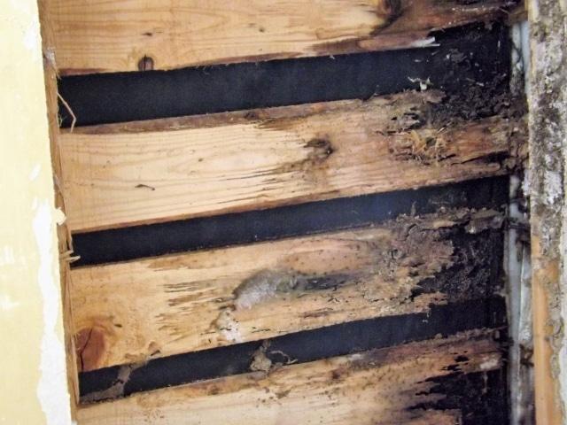 シロアリによる木部の被害